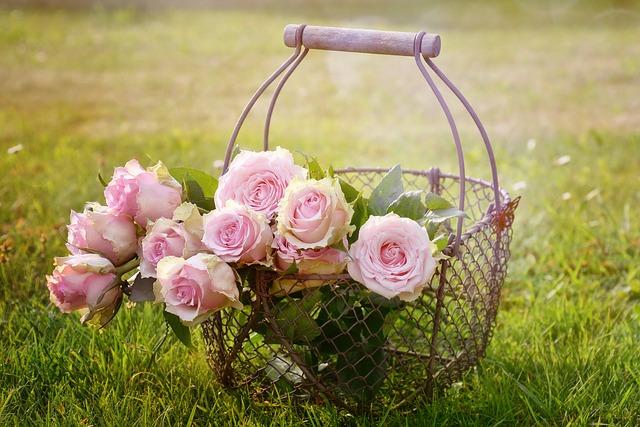 růže v košíku.jpg