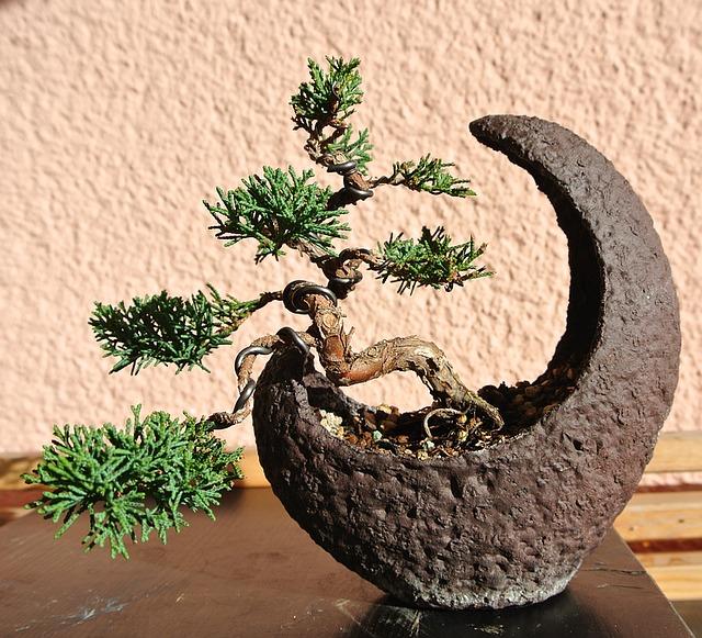 bonsai v květináči