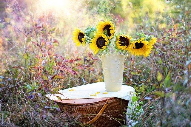 kytice slunečnic ve váze