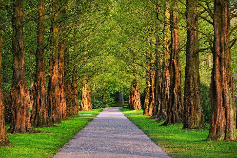 stromořadí s cestou